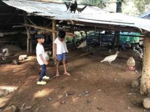 Orienting children on proper animal care