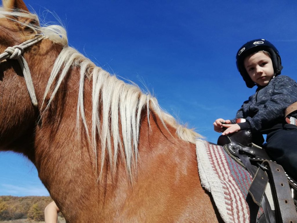 Build a Horse Therapy Centre for Disabled Children