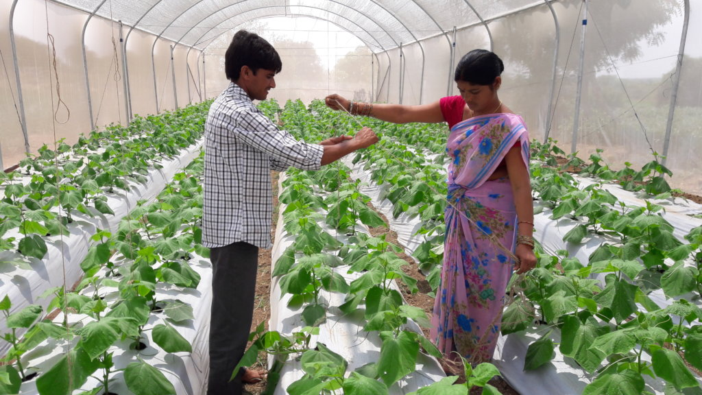 Greater food security for poor farmers in India