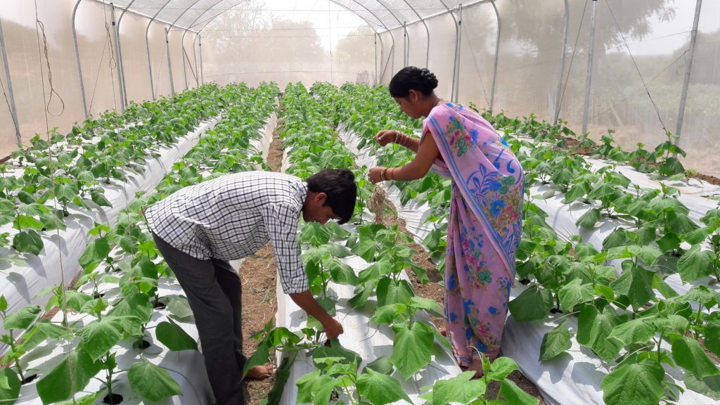 Greater food security for farmers in rural India
