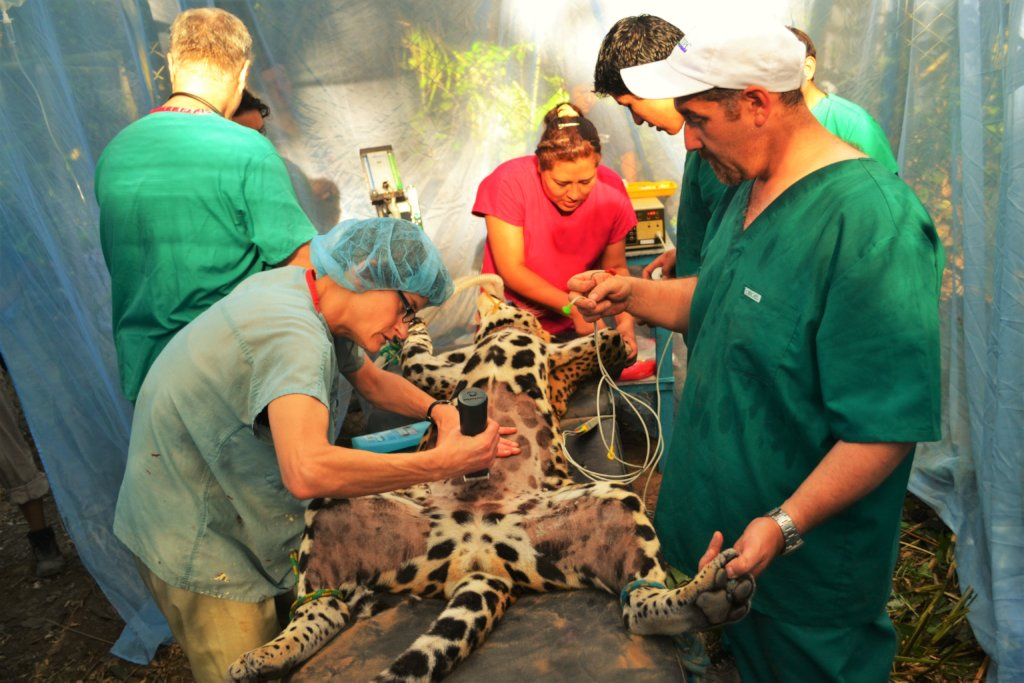 Rescue Orphaned & Injured Animals in the Amazon