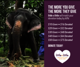 Support World Elephant Day Campaign Monday Aug.12