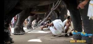 Handlers seek shelter beneath elephants from sun