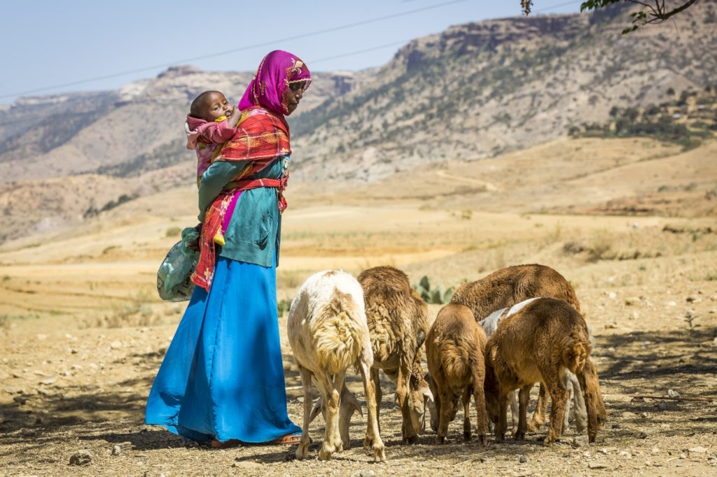 A gift for life: a sheep for a family in Eritrea