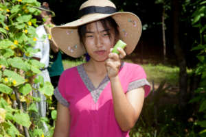 Trying out the cucumbers