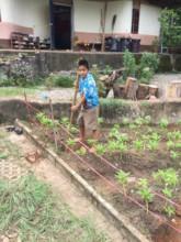 Starting the new flower garden
