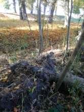 Fields in Rynski Dwor