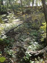Pond in Rynski Dwor