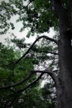 Rynski Dwor Trees