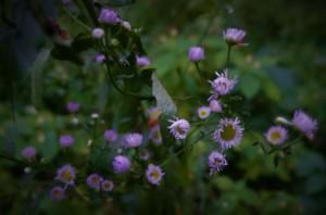 Rynski Dwor Wild Flowers