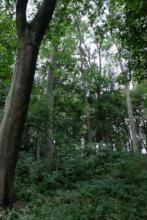 Park Interior in Rynski Dwor