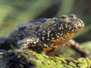 Safeguarding Frogs and Birds in Masuria, Poland