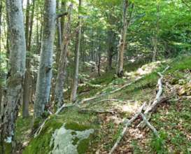 Forest around Kyustendil