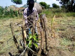 Refugees invest heavily in protecting fruit trees