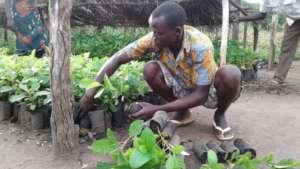 Patrick packs indigenous fruit trees for schools