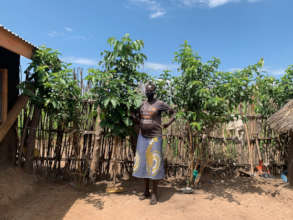 Refugee with guava + Markhamia trees just 1 yr old