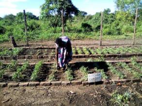 Pre-COVID, a nursery worker harvests vegetables