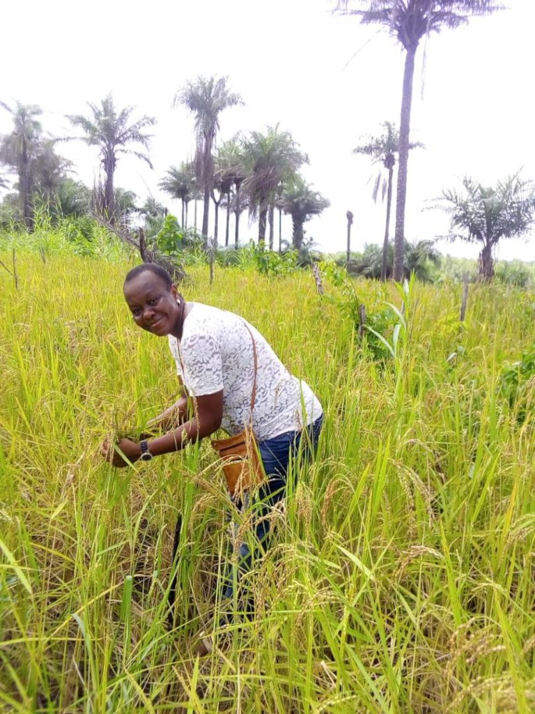 Help Farmers for Rice Processing Machine