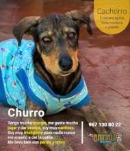 Churro in adoption