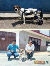 Cinnamon premiered his wheelchair