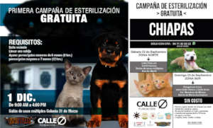 Posters of the free sterilization campaigns