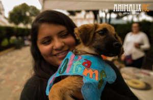 Dog adoption fair