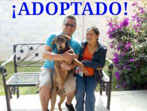 Churro is finally adopted