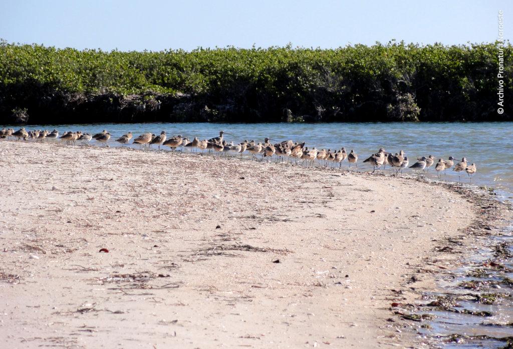 Create 50 guardians for Bahia Magdalena mangrove