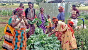 GEA cooperative farmers at harvest.