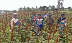 GEA cooperative farmers showing red quinoa.