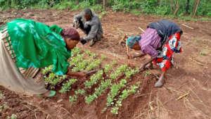 Preparing seedlings for relocation.