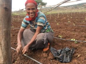 Birhan Ladies Group member fixing a dripline.