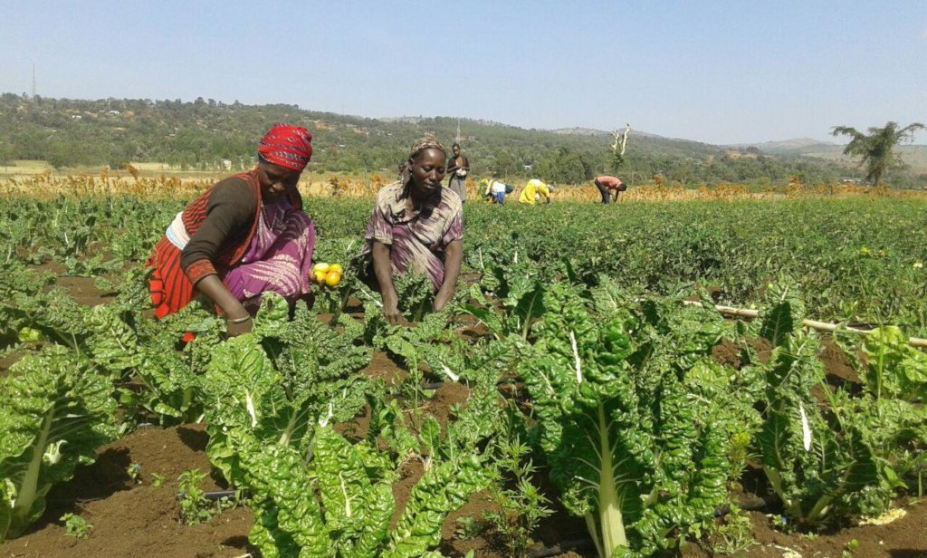 Gardens Give Hope, Health, and Income in E. Africa