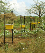 sample bee hives installed
