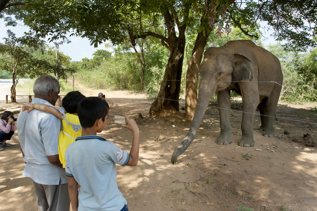 Investing in Communities to Conserve Elephants