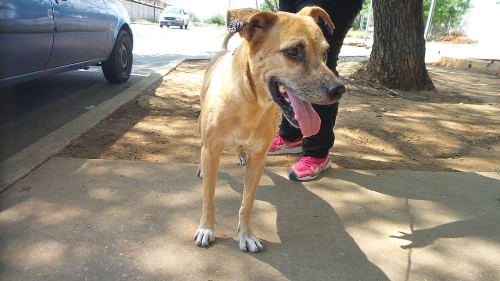 Help us stop cancerous tumours in Venezuelan dogs