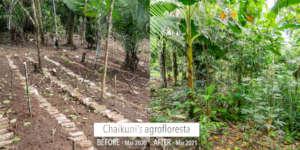 'Agrofloresta' one year development
