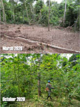 The 'agrofloresta', before and after