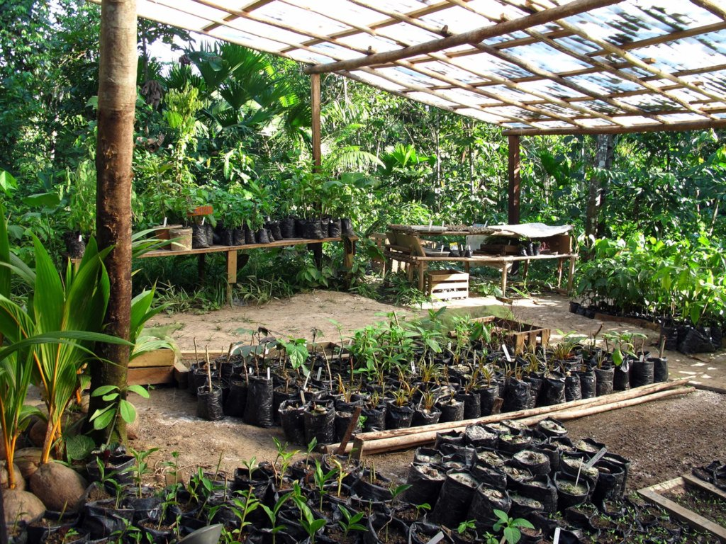 Ayni, Regenerative Food Forest in the Amazon