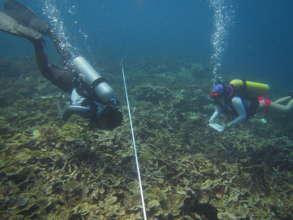 Reef monitoring surveys