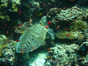 Protect Coral Reefs in Malaysia