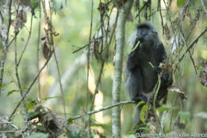 Help stop bushmeat consumption in Cambodia