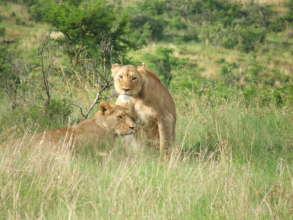 Protecting the Big 5 in South Africa