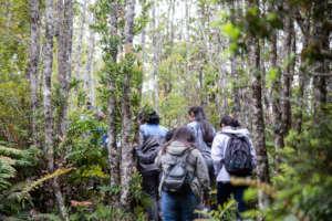 Explorando Parque Nacional Alerce Andino