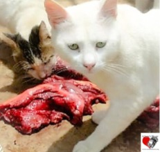 Our Cats with a Meal