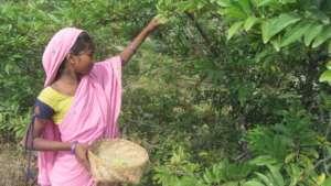 Rama Picking Fruits