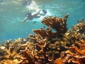 Little Reef en el pasado