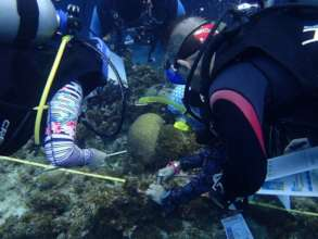 Reef Check EcoDivers monitor coral reef health