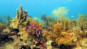 Survey the health of corals & people in San Andres