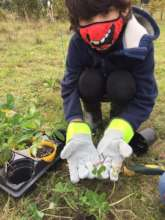 Planting Wildflowers into the Meadow